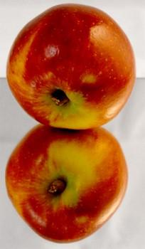 Ein gespiegelter Apfel