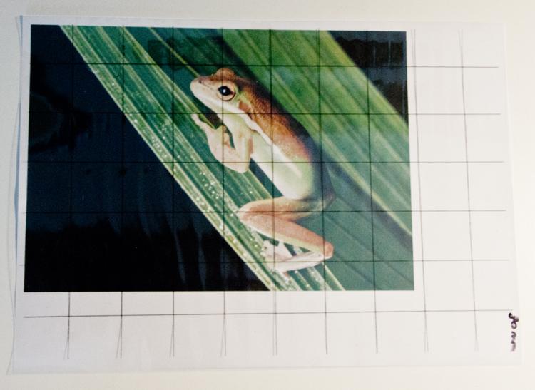 Frosch Foto mit Raster zeichnen