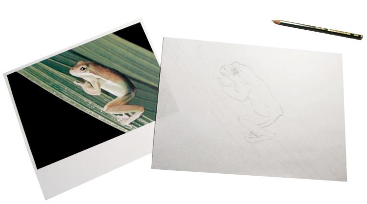 Frosch-Foto und Zeichnung
