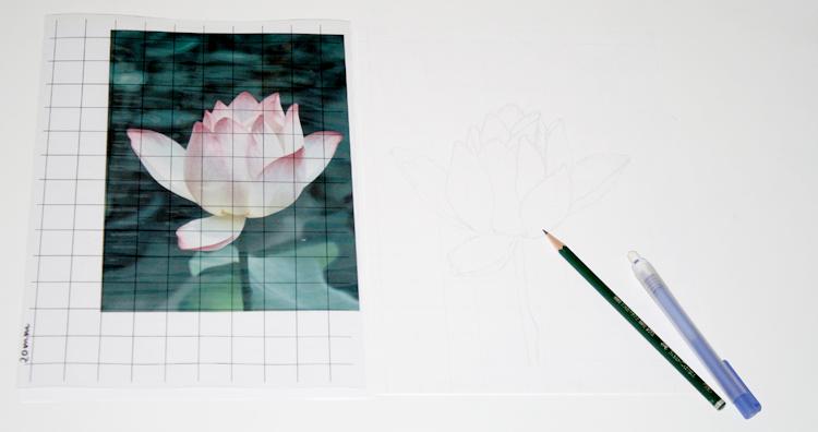 Seerosen-Foto und Zeichnung mit Raster zeichnen