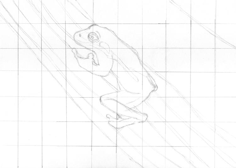 Zeichentechnik: Gezeichneter Frosch mit Raster