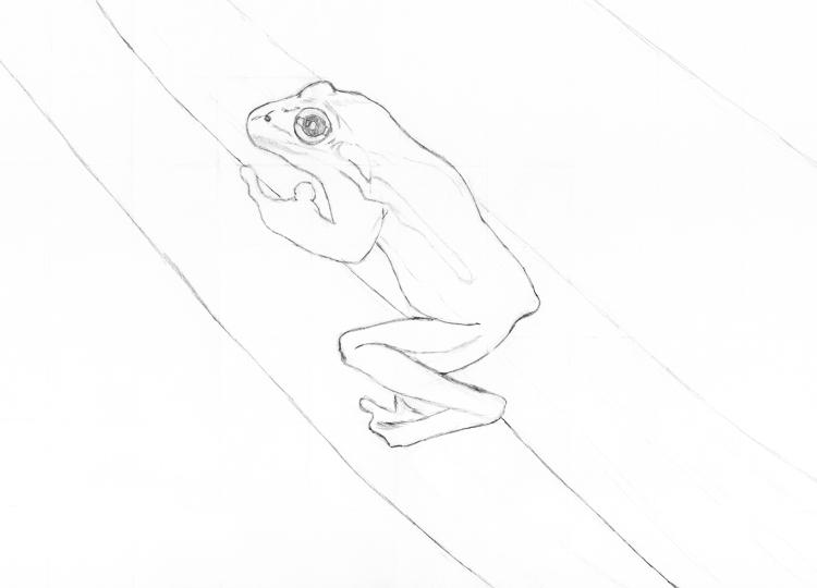 Frosch Bleistiftzeichnung