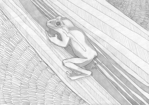Frosch Bleistiftzeichnung fertig schattiert