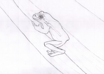 Frosch Zeichnung mit Raster