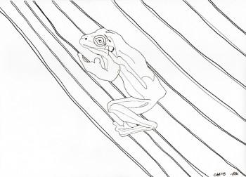 Frosch Zeichnung Tusche-Konturen