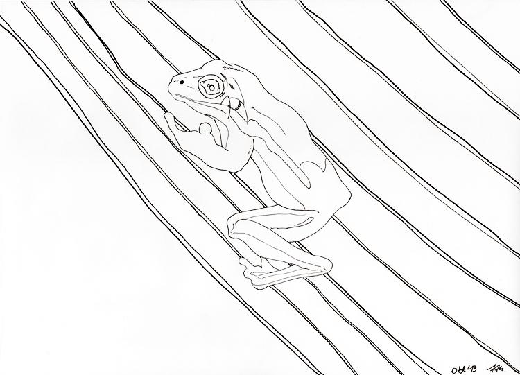 Frosch Zeichnung