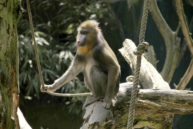 Foto eines Affen bearbeitet