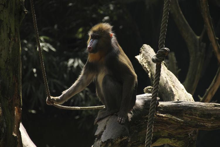 Foto eines Affen im Original