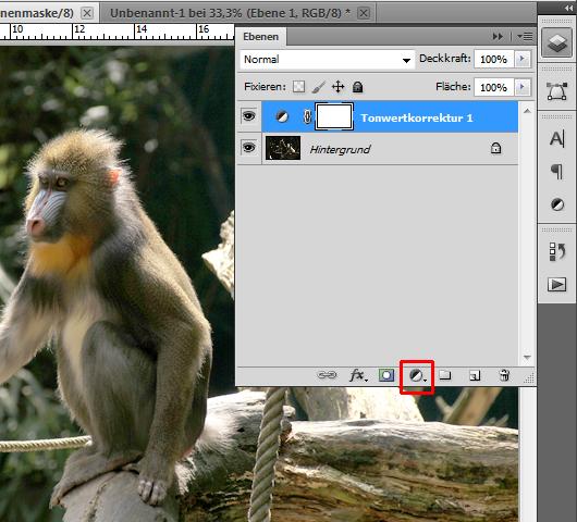 Foto eines Affen: Tonwertkorrektur anwenden