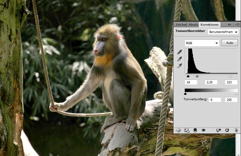 Foto eines Affen: Tonwertkorrektur bearbeiten
