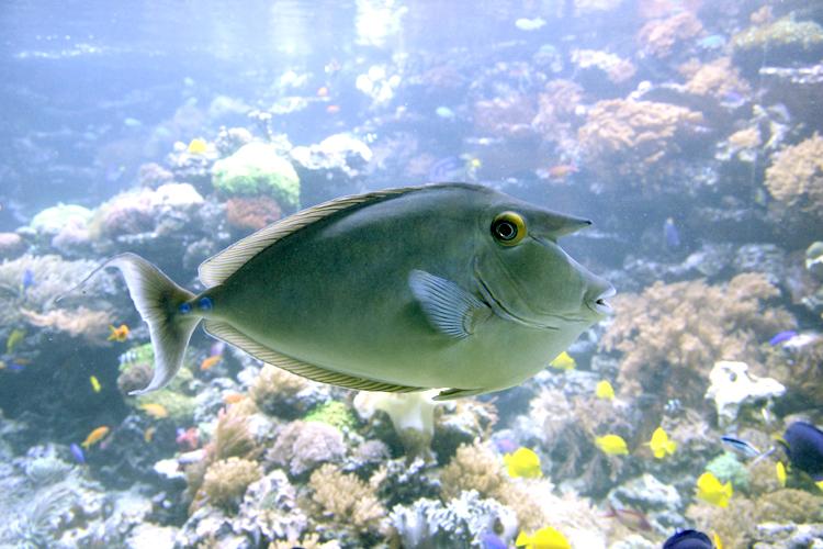 Bearbeitetes Fisch-Foto