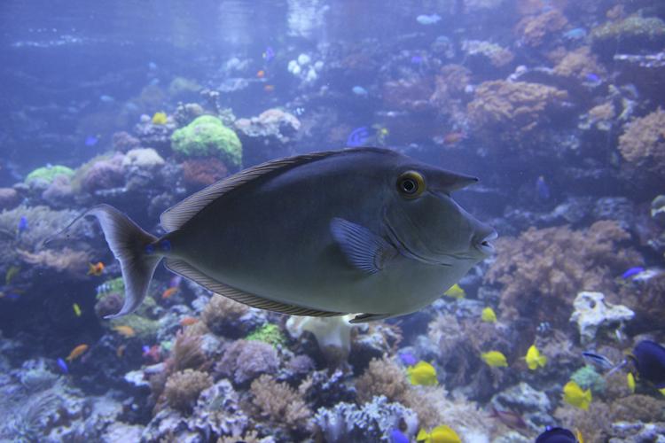 Fisch-Foto im Original