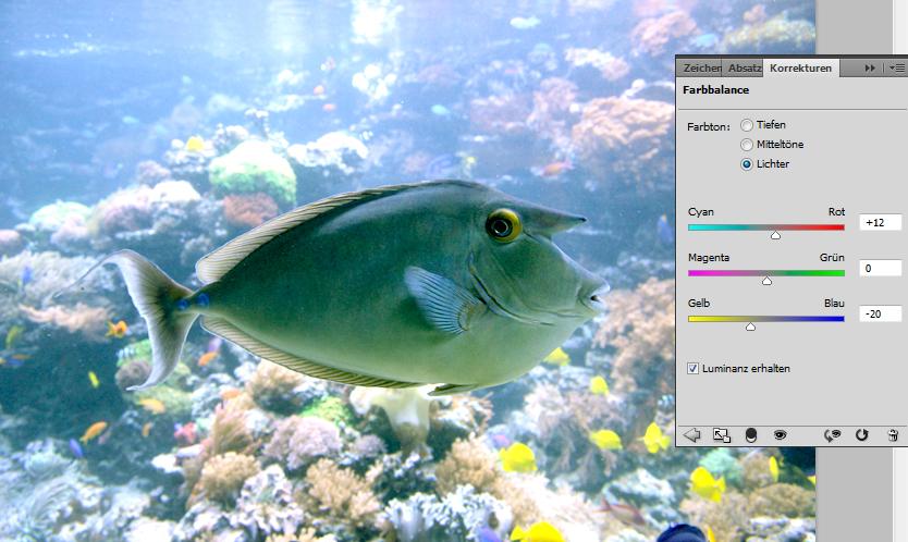 Fisch-Foto: Farbbalance