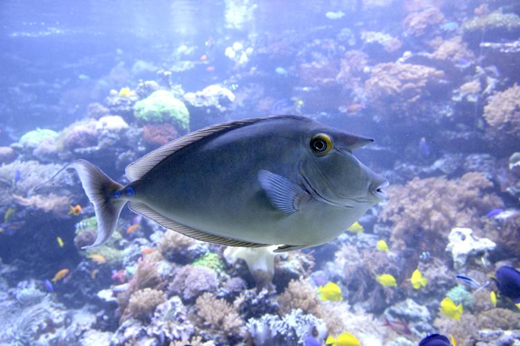 Fisch-Foto: nach der Tonwertkorrektur