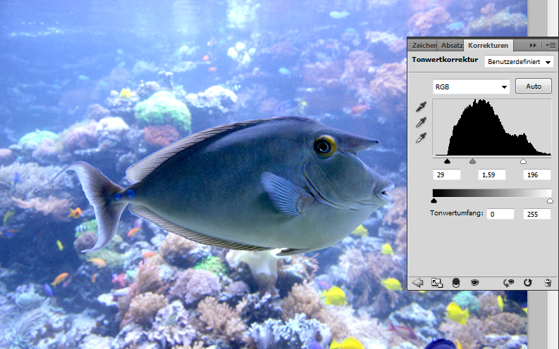 Fisch-Foto: Tonwertkorrektur anwenden