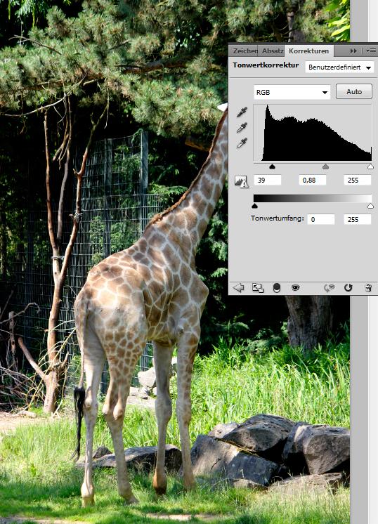 Foto einer Giraffe: Tonwertkorrektur anwenden