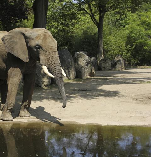 Foto Elefant: Anschnitt