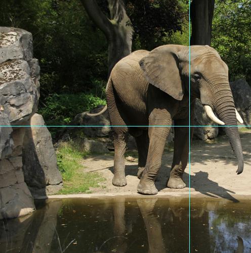 Foto Elefant: Anschnitt mit Hilfslinien