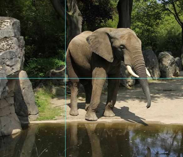 Foto Elefant: goldener Schnitt mit Hilfslinien