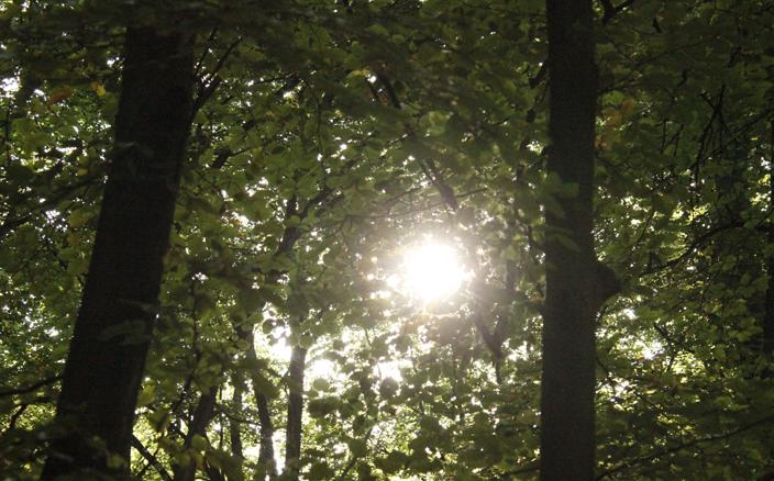 Foto Sonne: goldener Schnitt