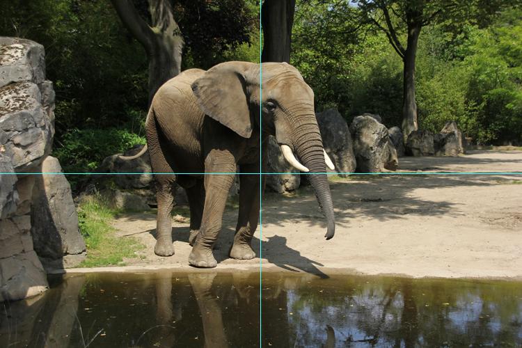 Original Foto Elefant mit Hilfslinien
