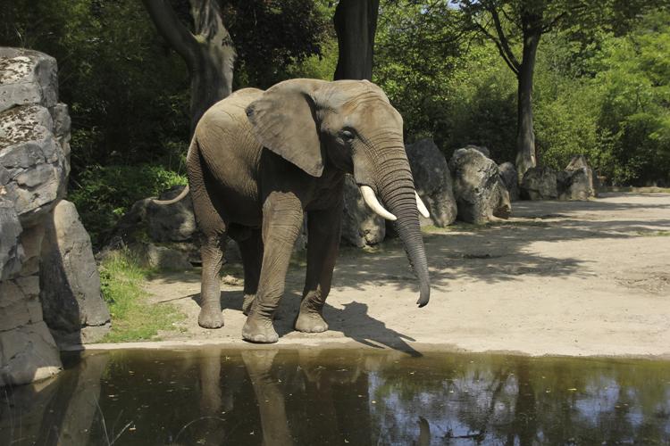 Original Foto Elefant