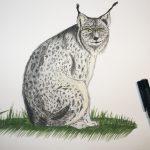 Luchs mit Pitt Artist Pen gemalt