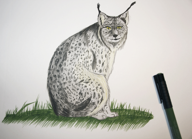 Luchs mit Tuschestift gemalt