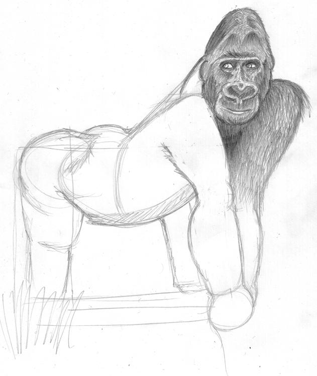 Gorilla zeichnen - Schritt 1