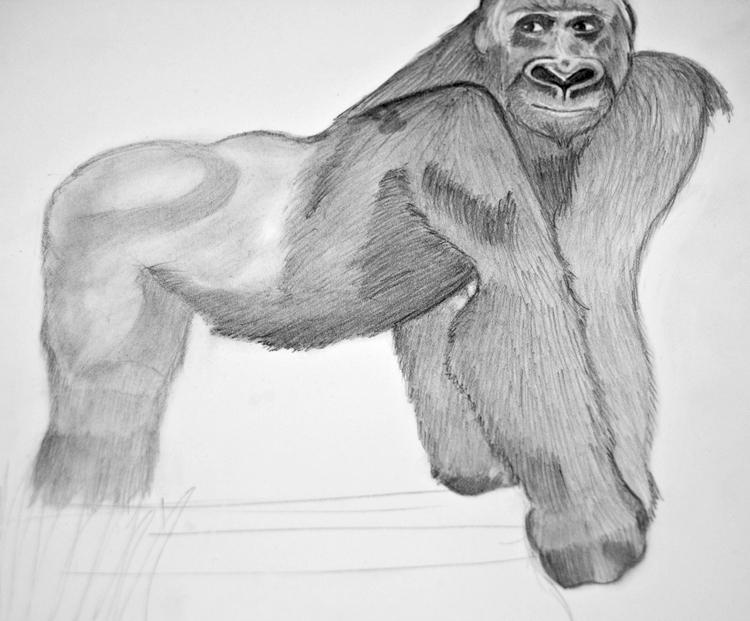 Gorilla Bleistiftzeichnung 10