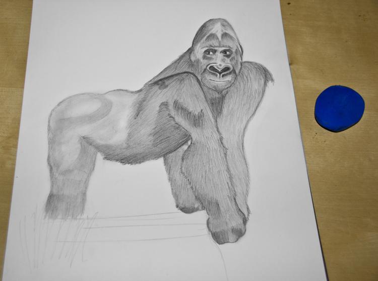 Gorilla Bleistiftzeichnung 11