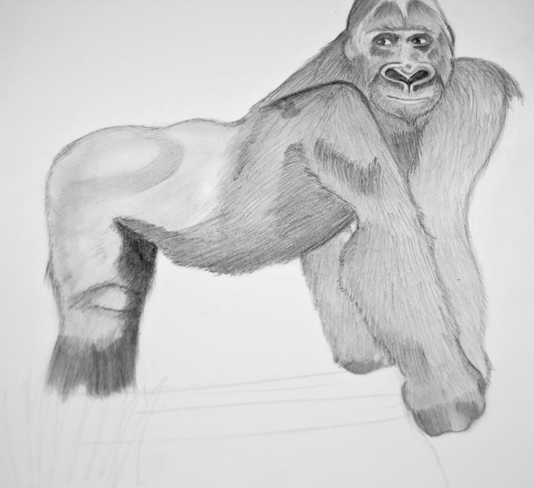 Gorilla Bleistiftzeichnung 12
