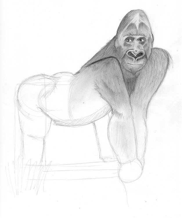 Gorilla Bleistiftzeichnung 2