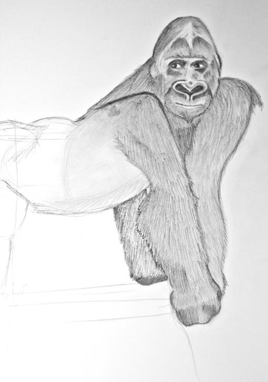 Gorilla Bleistiftzeichnung 3