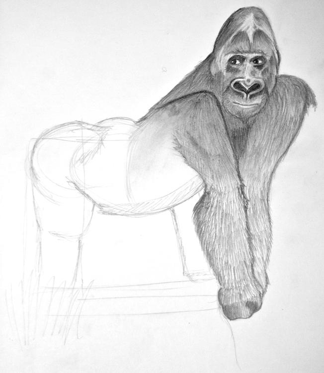 Gorilla Bleistiftzeichnung 4