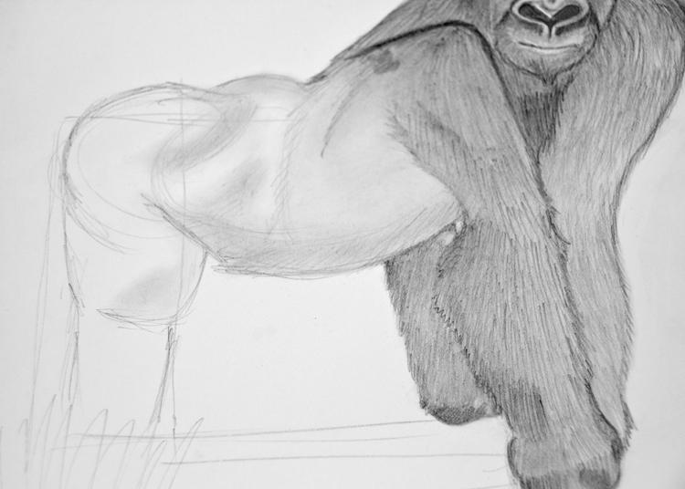 Gorilla zeichnen - Schritt 5