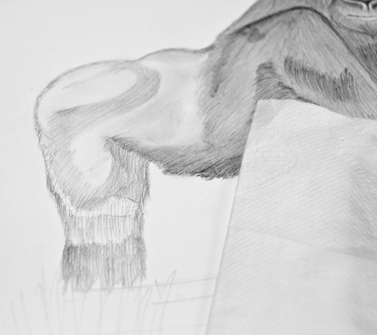 Gorilla Bleistiftzeichnung 8