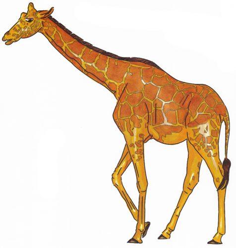 Giraffenzeichnung kolorieren
