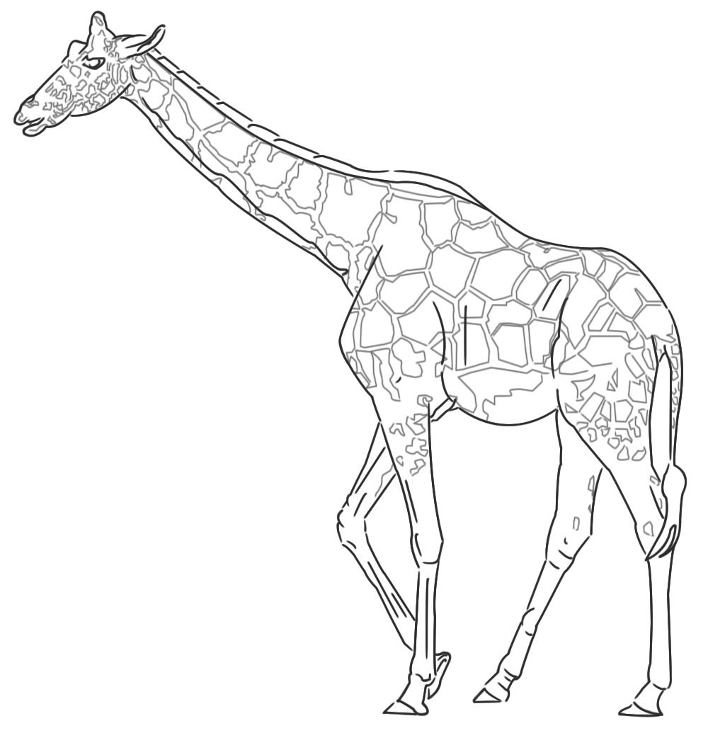 ich m chte eine giraffe zeichnen wie geht das ein zeichentutorial. Black Bedroom Furniture Sets. Home Design Ideas