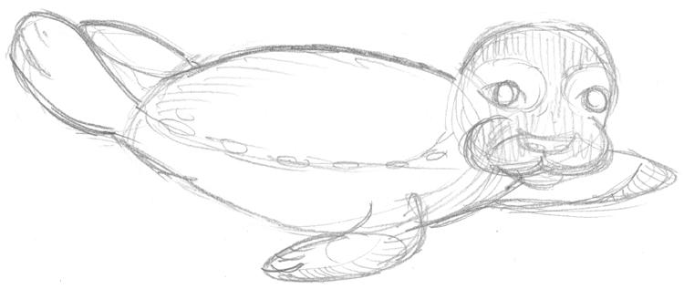 Seehund zeichnen: Bleistiftskizze Robbe 2