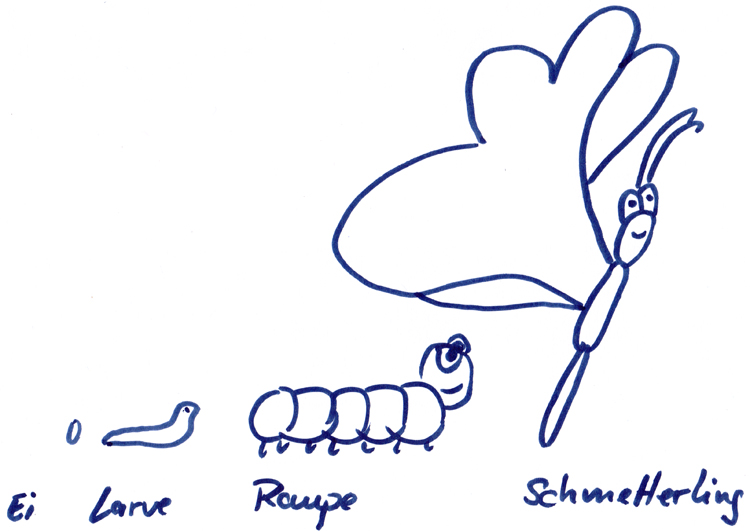 Schmetterling zeichnen – eine Zeichenanleitung für Kinder