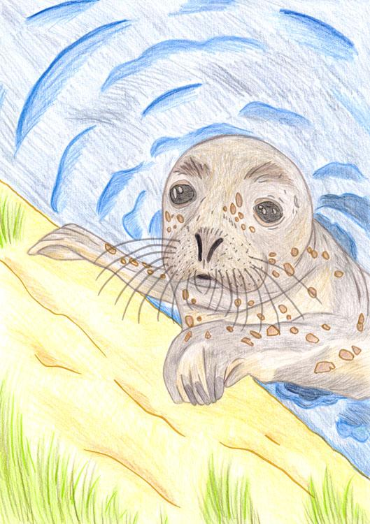 Seehund Zeichnung 3