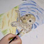 Seehund Zeichnung: Aquarellbuntstift aquarellieren 4