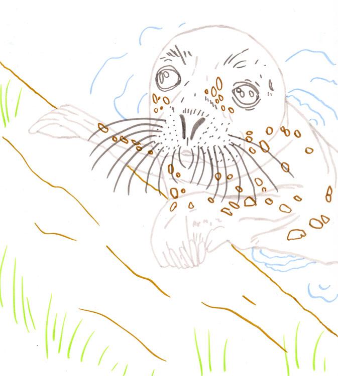 Seehund Zeichnung mit bunte Konturen