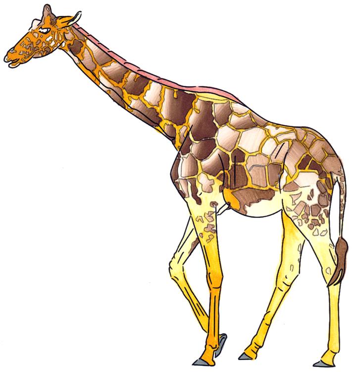 Chameleon Markertest - Giraffe