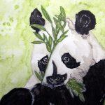 Pandabär in Aquarell mit Salz-Effekt