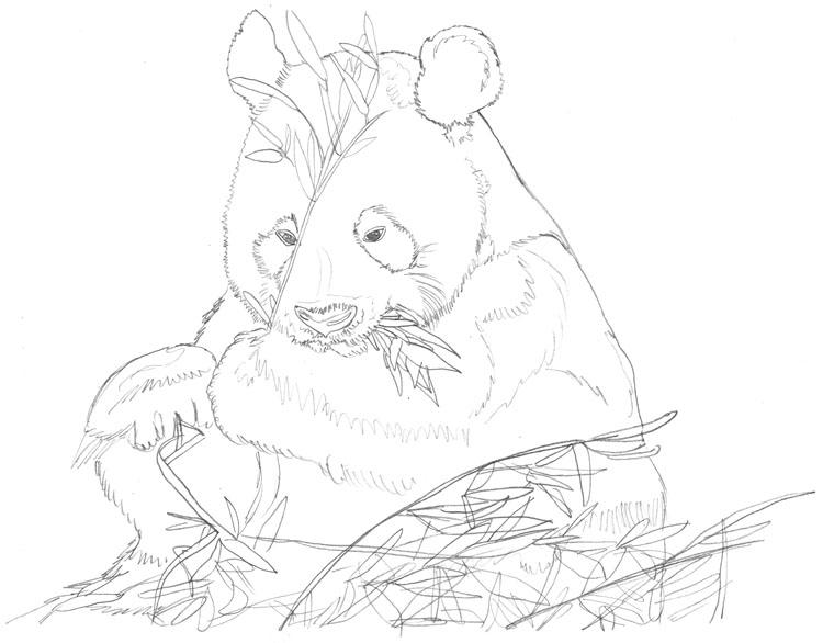 Pandabär - Bleistiftskizze