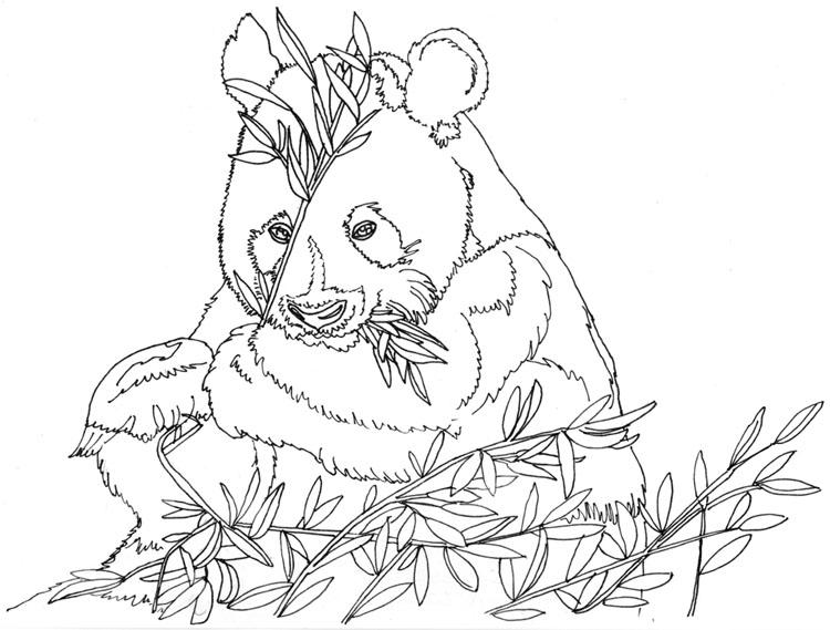 Pandabär - Fineliner Konturen