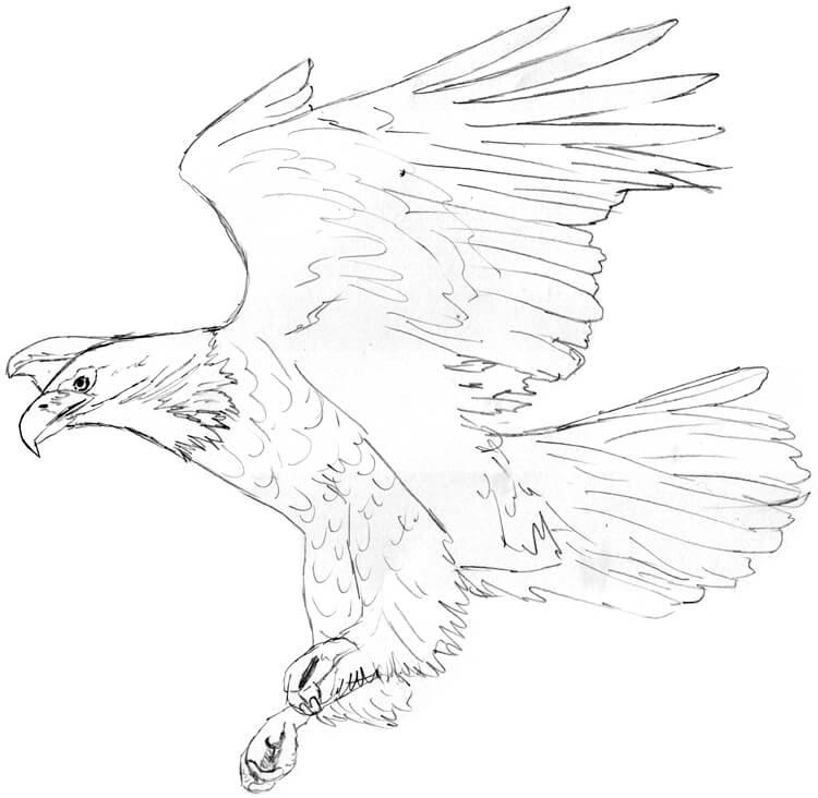Tier ABC: A wie Adler - Adler zeichnen und malen lernen