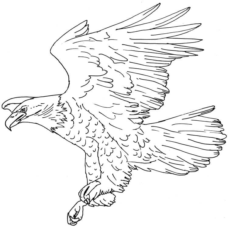 Adler Finelinerzeichnung